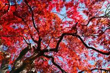 Autumn Season Colorful Of Lea...