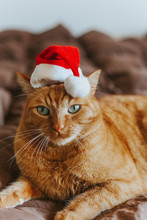 Ginger Cat With A Santa's Hat