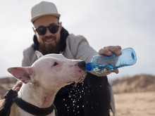 Man Giving Water To Bull Terrier