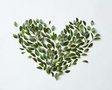 Green Leaves Arranged In Heart Shape