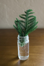 Simple Greenery In A Glass Jar