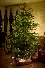 Traditional Real Christmas Tree In A Living Room At Night.