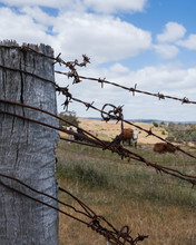 Old Farm Post With Rusted Barbed Wire