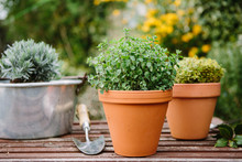 Potting Up Spring Flowers In The Garden