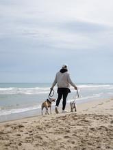 Man Walking Dogs At Ocean