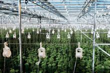 Urban Agriculture