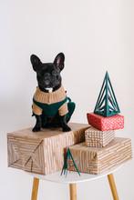 French Bulldog And Christmas Gifts