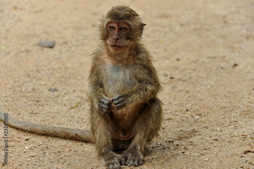 Poster Aap Unhappy monkey in Thailand