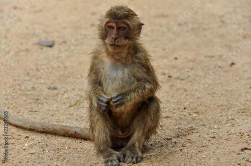 Foto op Aluminium Aap Unhappy monkey in Thailand