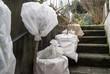 canvas print picture - Pflanzkübel und eingetopfter Hochstamm wurde mit Vlies umwickelt. Die Pflanzen sind vor der Kälte im Winter geschützt und stehen auf der Kellertreppe.