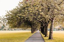 Path Under Autumn Trees