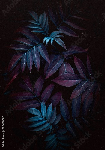 the colorful leaves Wall mural