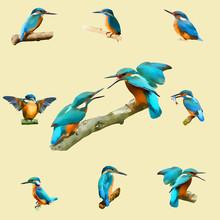 Kingfisher Illustration Blue B...