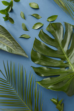 Creative Nature Of Layout Green Leaves