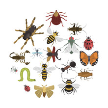 Different Insects Color Vector Icons Set. Flat Design