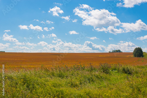 Fotobehang Cultuur Field and blue sky in summer day