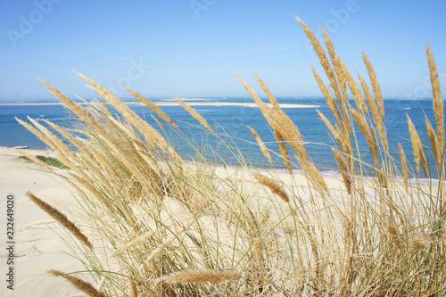 Fotografie, Obraz Spighe di grano sul mare