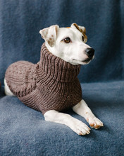 Cute Dog In Knitted Sweater