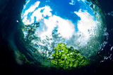 underwater gardens and water plants in cenotes cave diving in Mexico