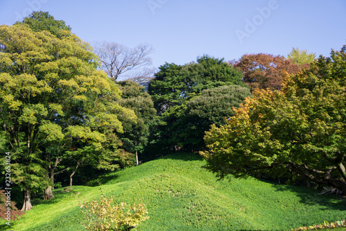 Green grass hill in Japanese garden when the leaves turn red with yellow and green leaves background (Koishikawa Korakuen, Tokyo, Japan)
