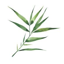 Watercolor Bamboo Branch