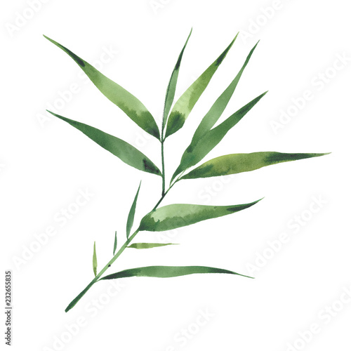 watercolor bamboo branch