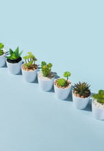 Cactus/aloe/bonsai And Other Plants Miniature.