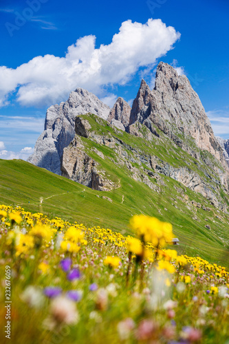 Ingelijste posters Alpen Dolomites Alps in springtime, green grass and flowers, Seceda mount in background. Trentino Alto Adige, Italy