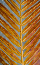 Yellow Palm Leaf Over Blue Background
