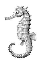Seahorse Fish Vintage Ink Hand...