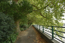 Thames Path And Thames River A...