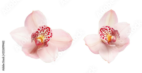 Set with beautiful orchid flowers on white background