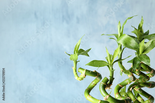 Green bamboo plant on color background, closeup. Space for text