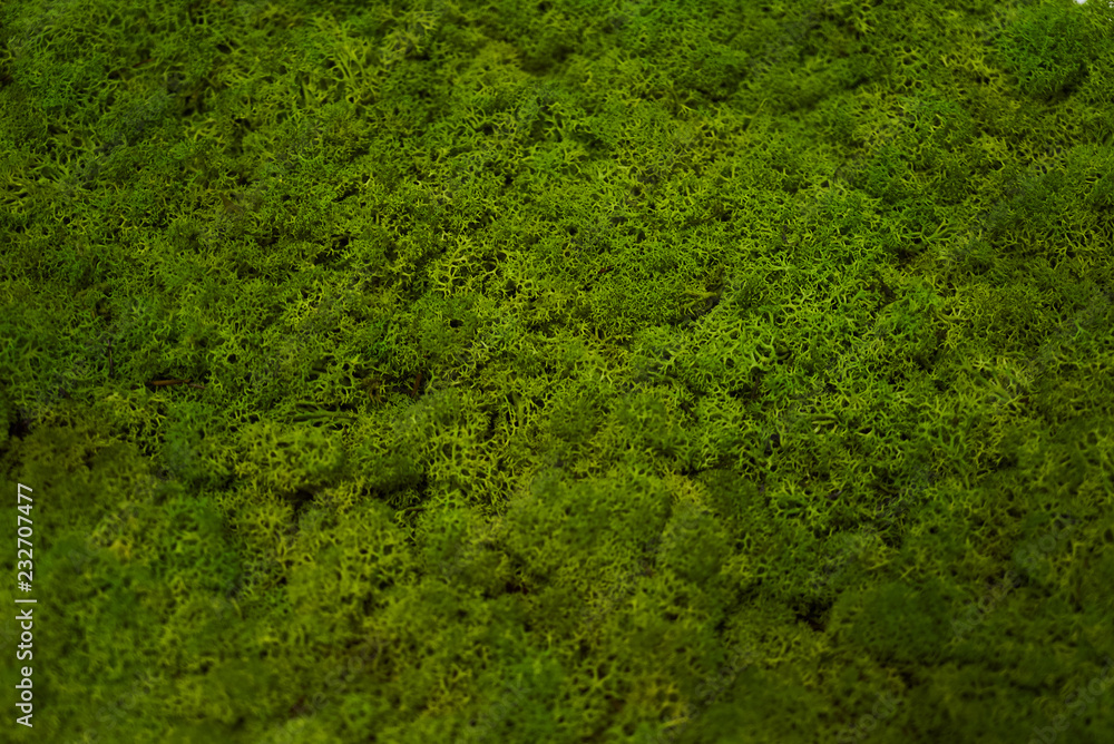 Fototapety, obrazy: Green moss grass texture background with copy space