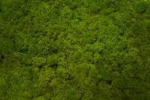 Green Moss Grass Texture Backg...