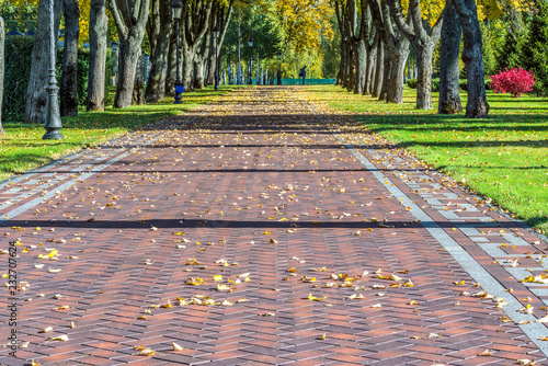 Autumn leaves on a picturesque alley in Mezhigirya near Kiev.