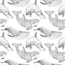 Seamless Pattern With Whales, Orcs And Other Fishes.