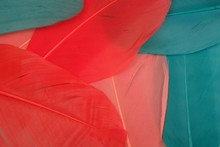 Bright Multicoloured Background From Bird Feathers