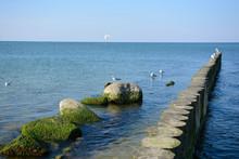Baltic Sea. Seagulls Sit On Ro...