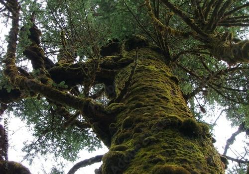 Fotografia Drzewo
