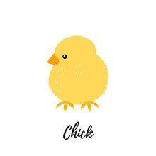 Cute Chick Isolated. Domestic Hen Kid Vector Illustration