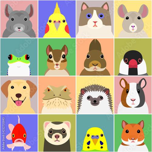 set of various pet animals face Fotomurales