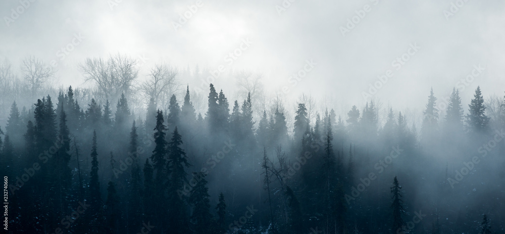 Fototapety, obrazy: Boreal Forest Fog - Canadian Forest Panorama