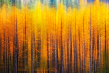 Fototapeta Las Fall in Kamikochi, Nagano, Japan//blurred background