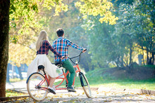 Back View Of Young Traveler Couple, Handsome Man And Attractive Blond Woman Cycling Together Tandem Double Bike Along Crackled Path In Lit By Bright Morning Sun Beautiful Autumn Park Under Trees.