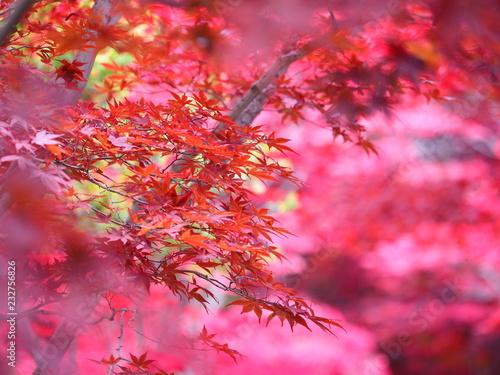 北海道の紅葉風景