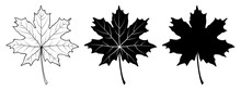 Maple Leaf. Linear, Silhouette...