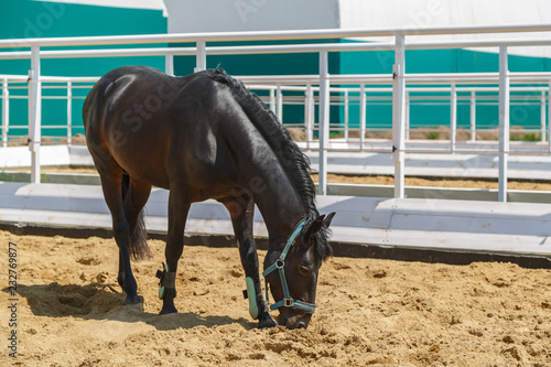 Fotografie, Obraz  Black horse stands in the corral have been bending her head
