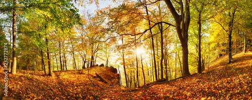Foto op Canvas Herfst Autumn forest in mountain at sunset with sun
