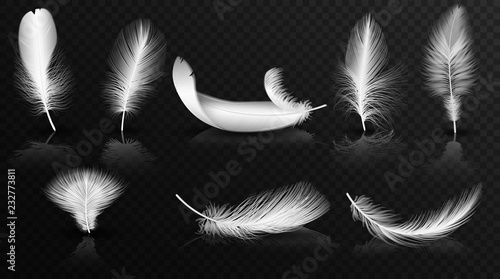 Fotografie, Obraz  Vector white feathers on the glossy transperant alpha background collection
